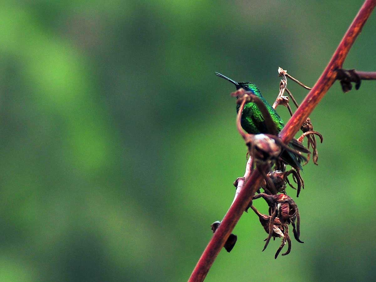 BIRDWATCHING Peru