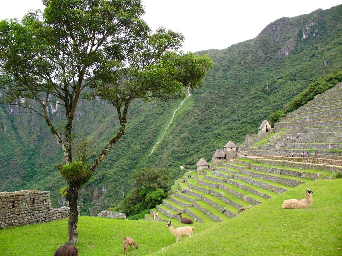 Llama Machu Picchu