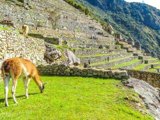 best-time-of-year-for-machu-picchu