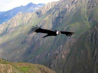 Condor Sight to Salkantay Trek 5 Days