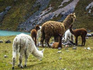 Lares Trek to Machu Picchu / 4 days