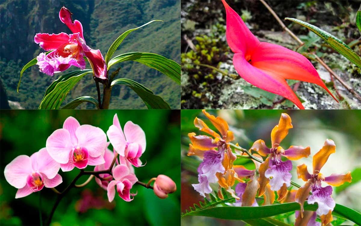 Orchids in Machu Picchu Cusco