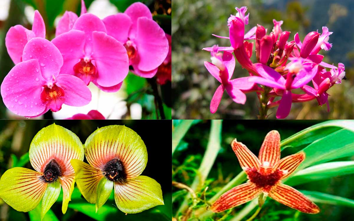 Orchids in Machu Picchu Peru